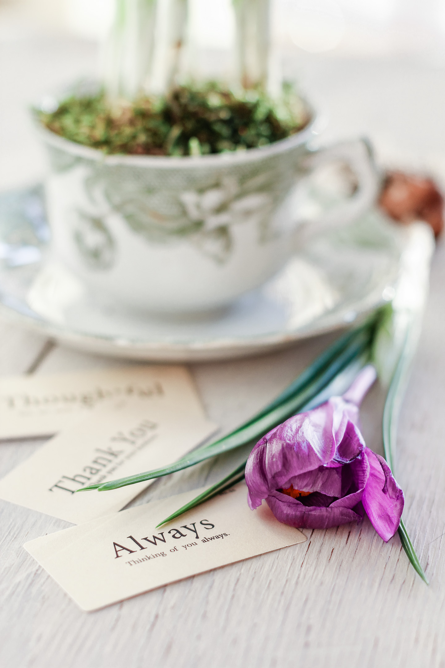 A teacup planted with flowers and a crocus bloom.