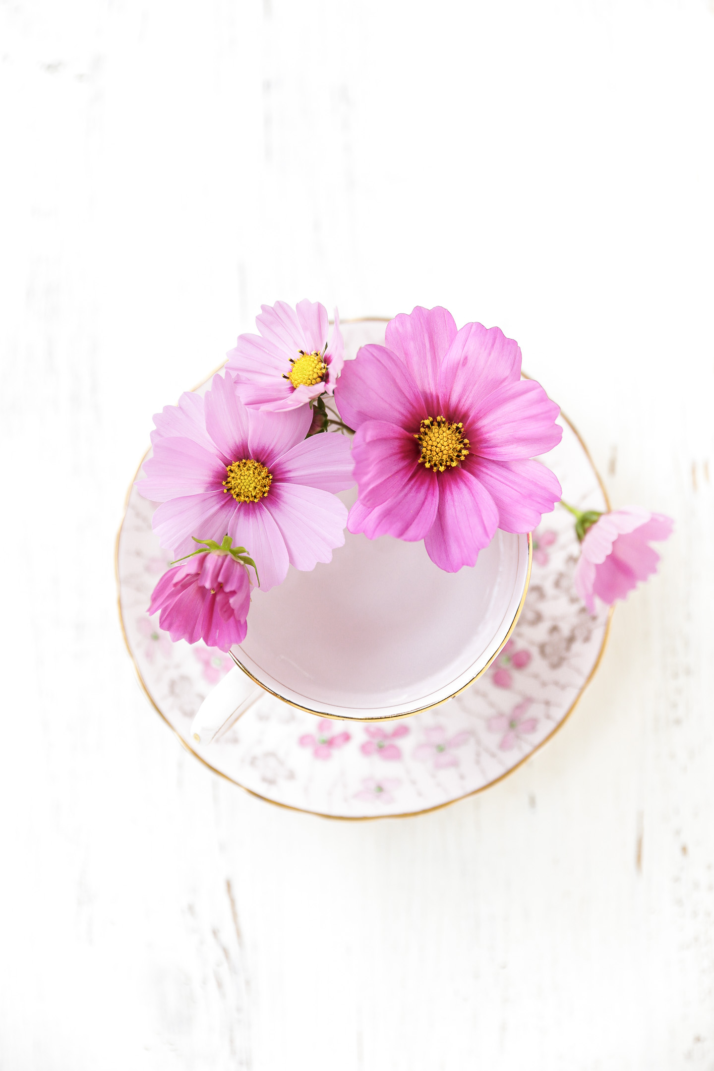 An overhead photo of pink cosmos in a vintage teacup.
