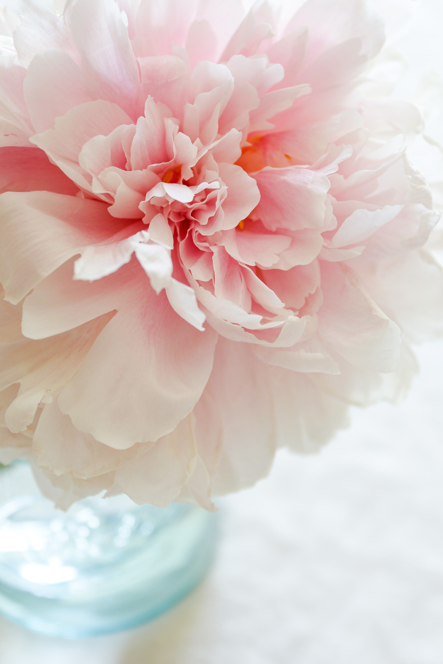 A pink peony in an old, blue Ball jar.