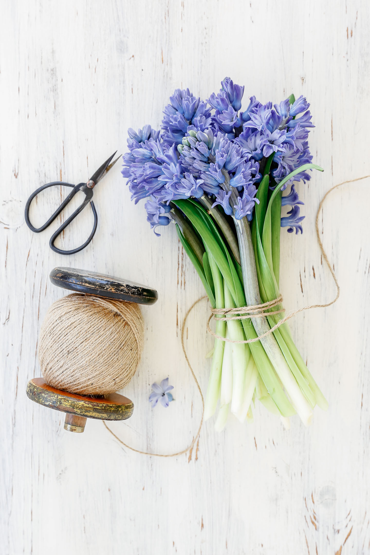 Purple hyacinth tied with twine on a white table