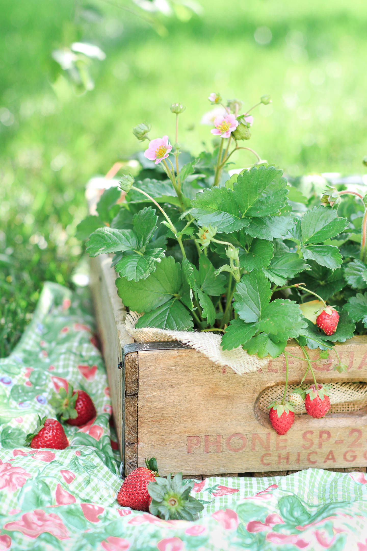 A wooden crate filled with strawberry plants.