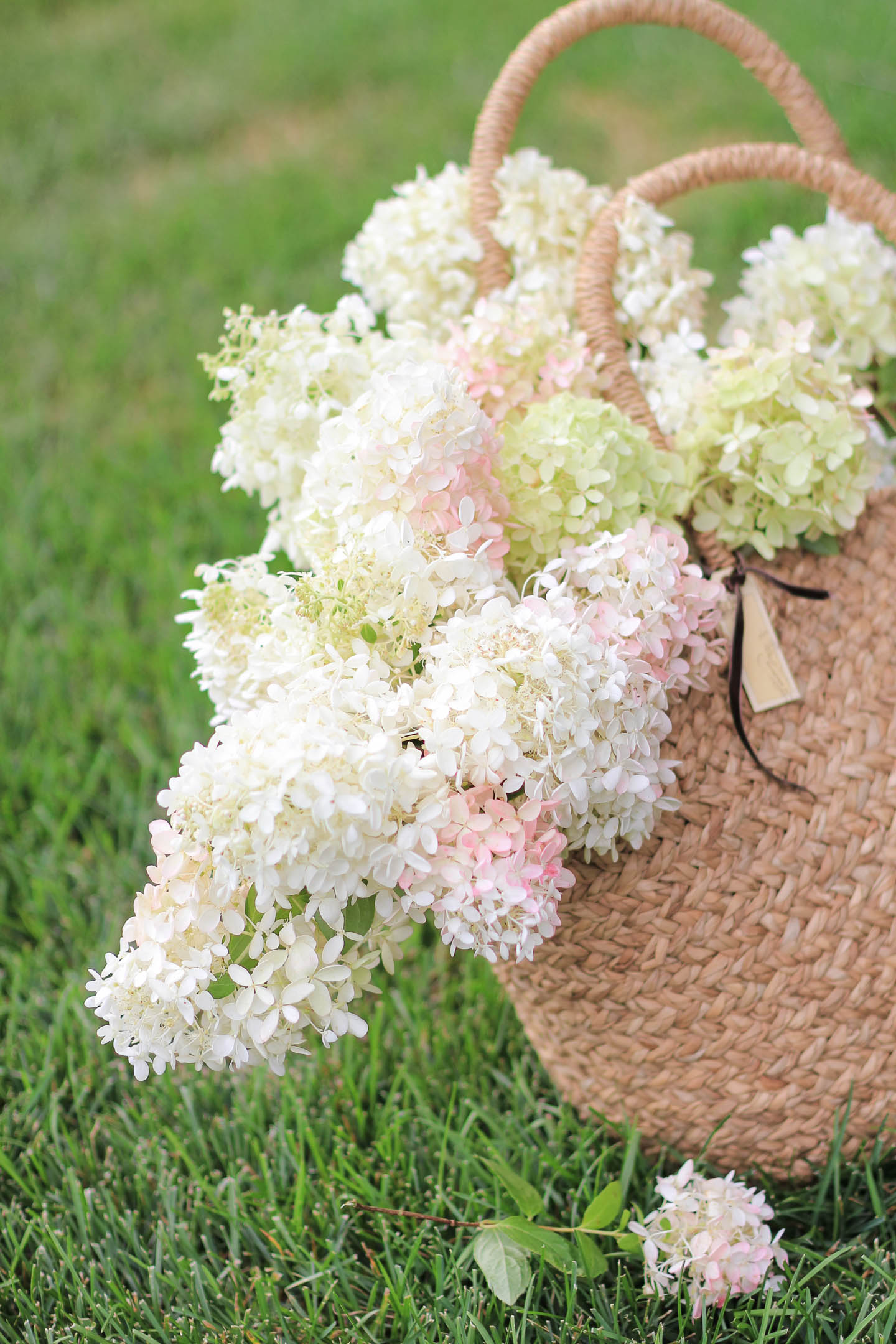 White, pink and green hydrangeas in  a bag.