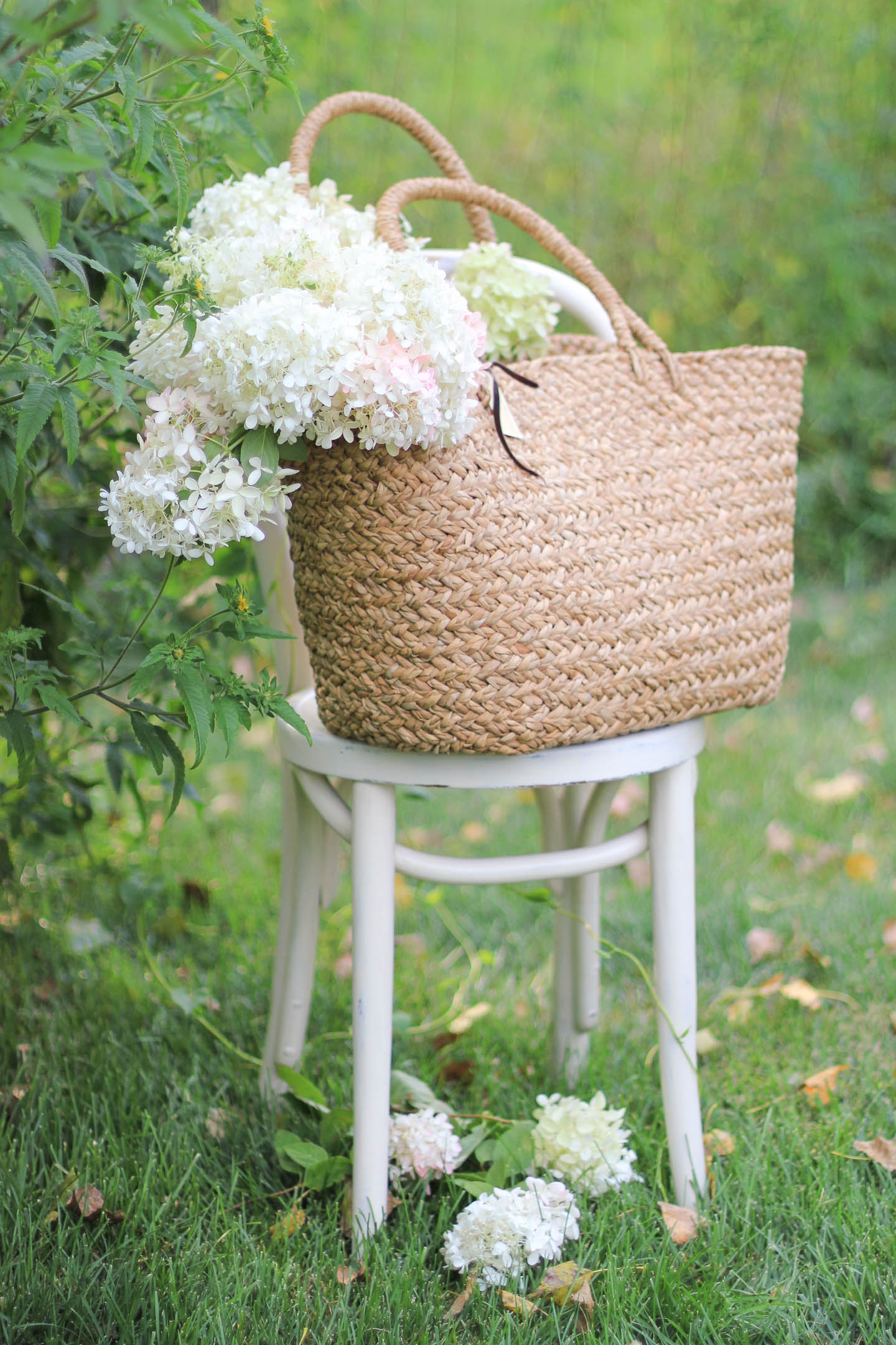 Pee Gee hydrangeas in a woven bag, sitting on a white chair.