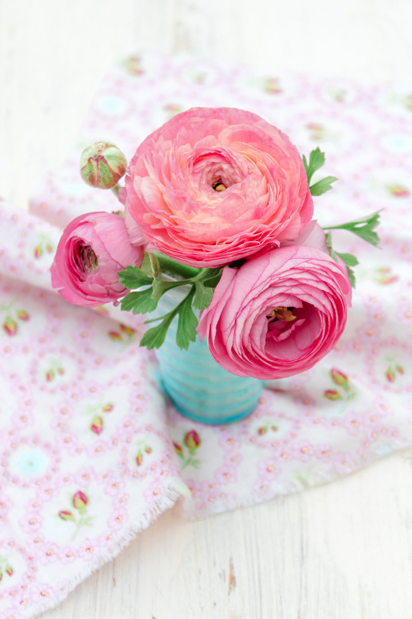 Pink ranunculus in a turquoise vase.