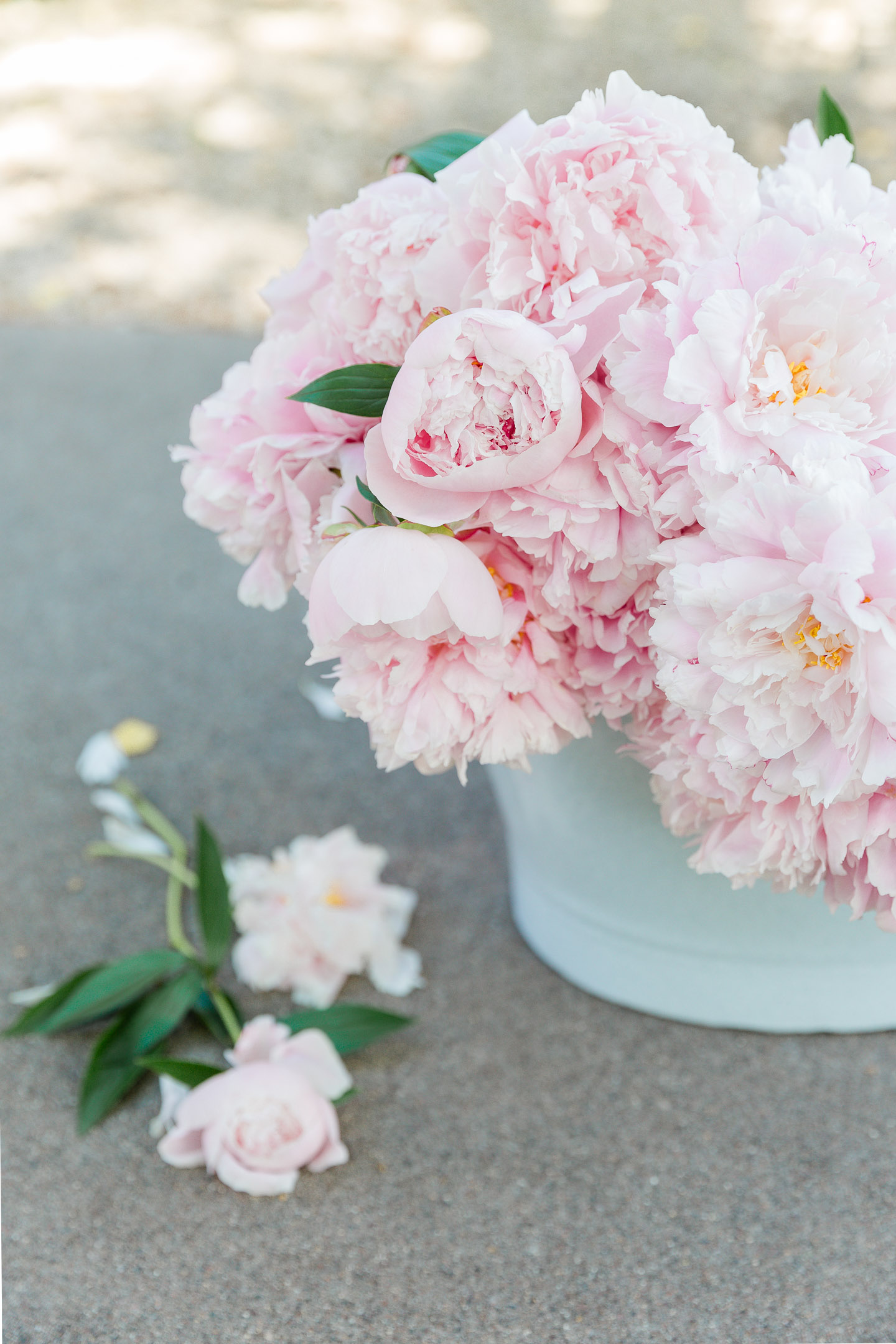 pink peonies in a pale blue bucket