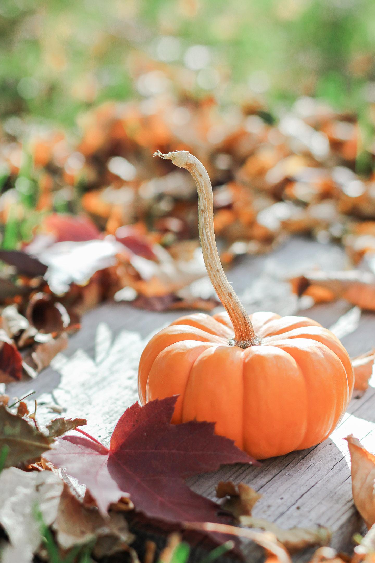 Little pumpkin with long stem.